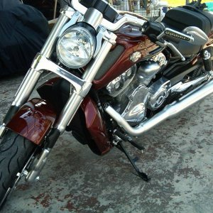 My new V-rod Muscle